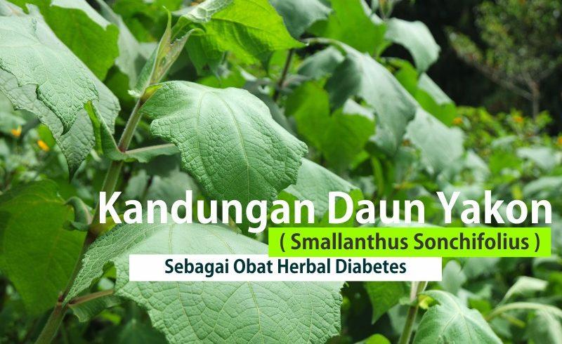 Obat Herbal Diabetes Ampuh Daun Yakon