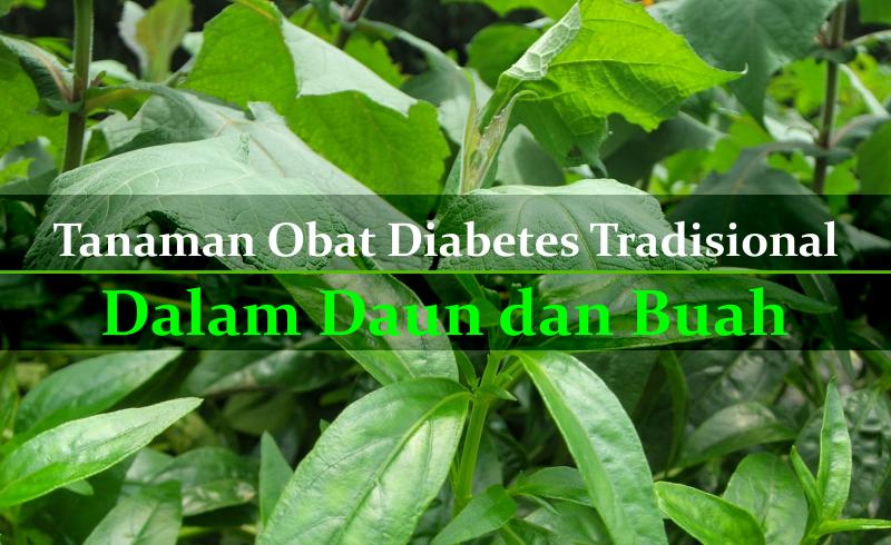Tanaman Obat Diabetes Tradisional Bagian Daun dan Buah